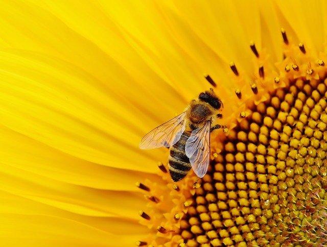Insektenschutz im Haus gegen Fliegen in der Wohnung